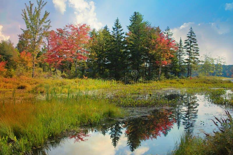 outono de Nova Inglaterra imagem de stock