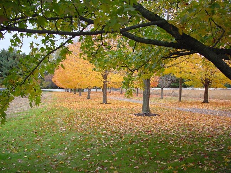 Outono Dentro Fotografia de Stock