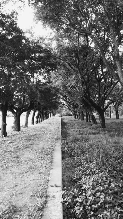 outono do bosque imagem de stock royalty free