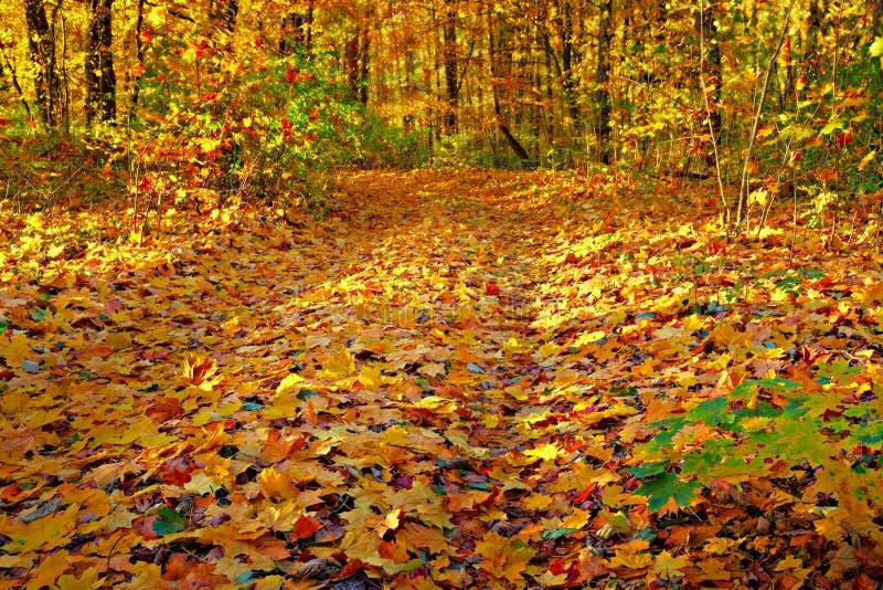 Outono do ouro fotografia de stock royalty free