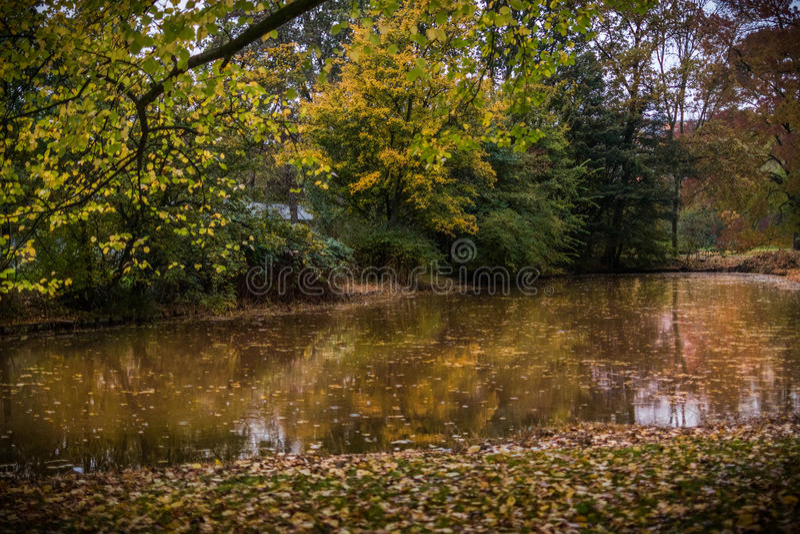 outono dourado em Países Baixos fotos de stock royalty free