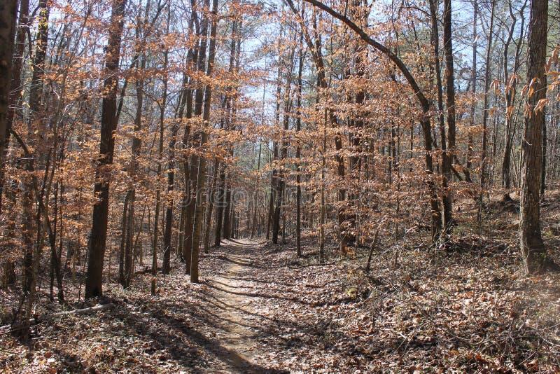 outono e o dia ensolarado agradável da floresta a correr foto de stock