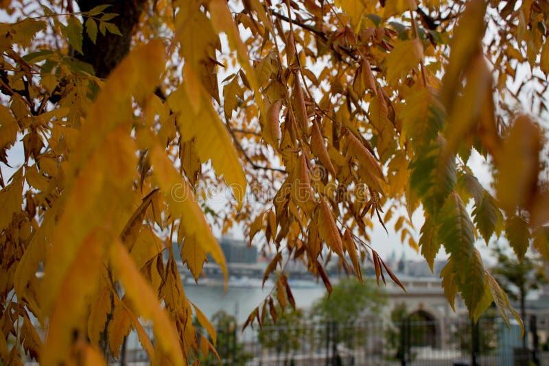 Outono em Budapest imagens de stock royalty free