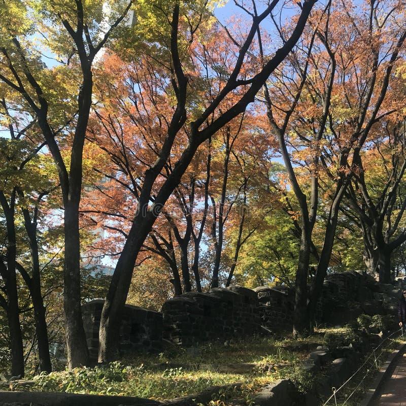 outono em Coreia do Sul fotografia de stock