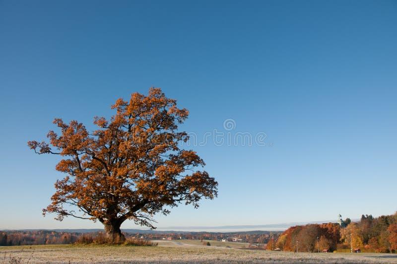 Outono em Europa imagens de stock royalty free
