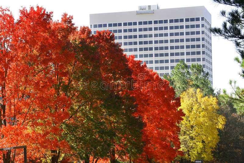 Outono em Geórgia imagem de stock