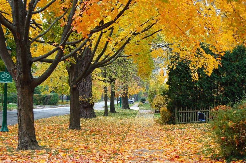 Outono em Illinois imagens de stock
