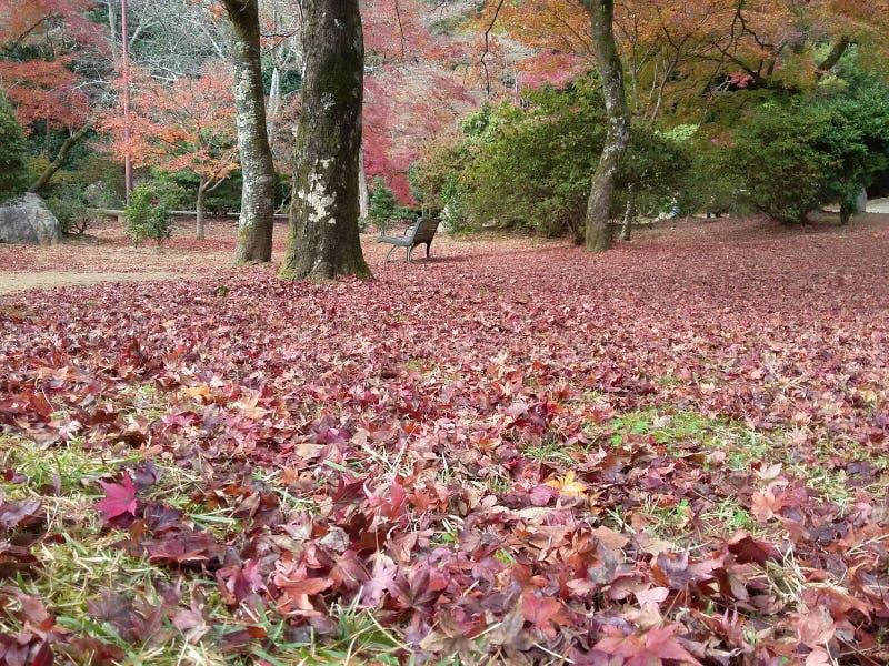 Outono em Kyoto imagens de stock