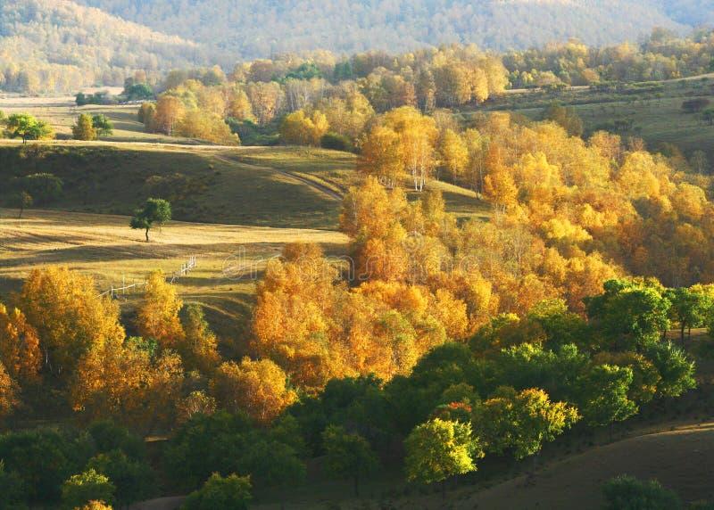 Outono em Saihanba imagens de stock