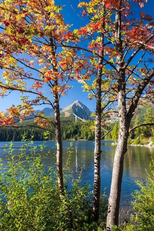outono em Strbske tarn, montanhas altas de Tatras, Eslováquia fotos de stock royalty free