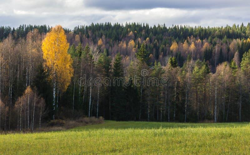 Outono em sweden fotos de stock royalty free