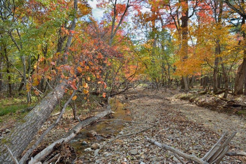 Outono em Taiga 7 imagem de stock