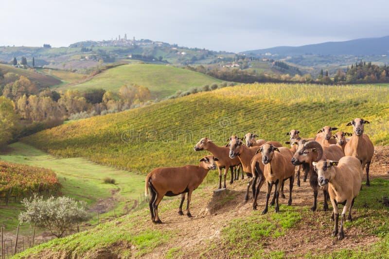 outono em Toscânia, Itália imagem de stock royalty free