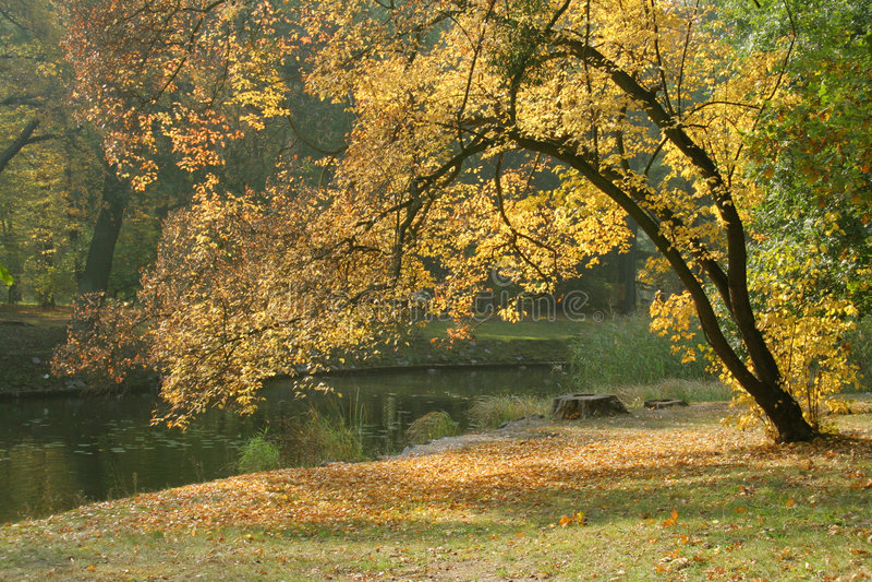 Outono em um parque fotos de stock royalty free
