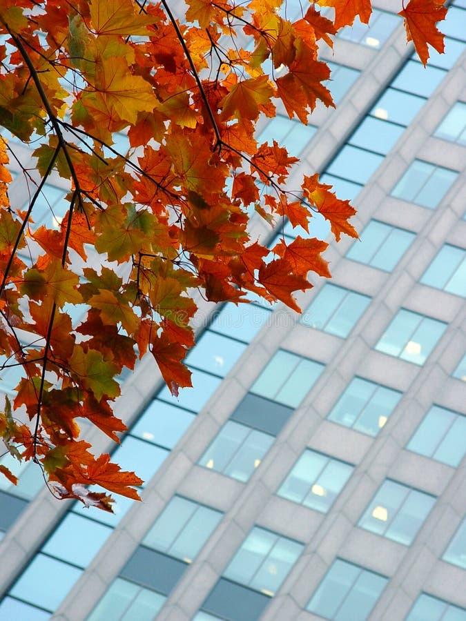 Outono em uma cidade imagens de stock royalty free