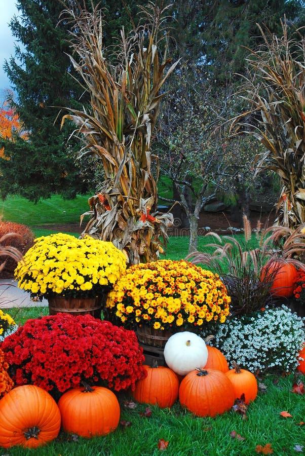 outono floral e exposição da abóbora fotos de stock