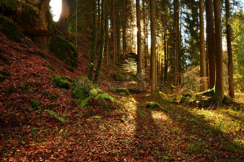 Outono Forrest foto de stock