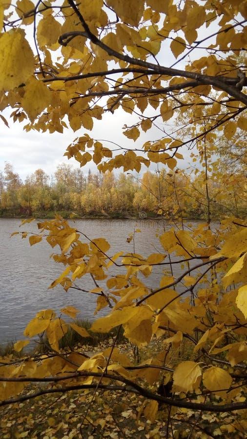 outono, foto do telefone celular imagens de stock royalty free