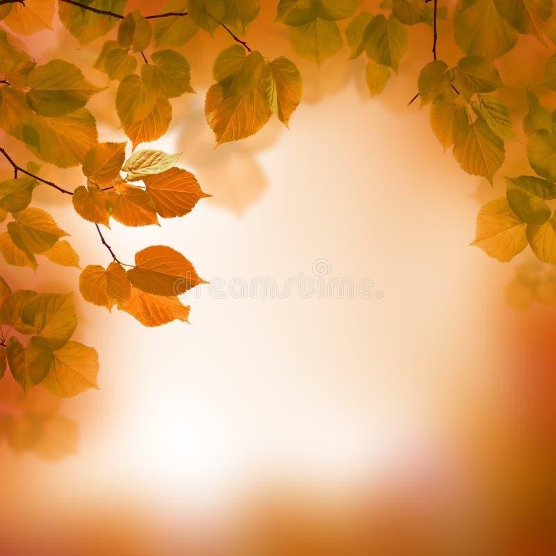 outono, fundo borrado fotografia de stock royalty free