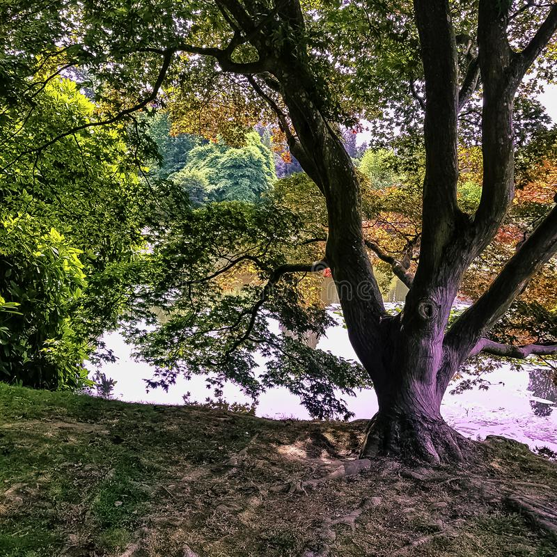 outono inglês com lago, as árvores e o sol visível irradiam - Uckfield, Sussex do leste, Reino Unido fotografia de stock