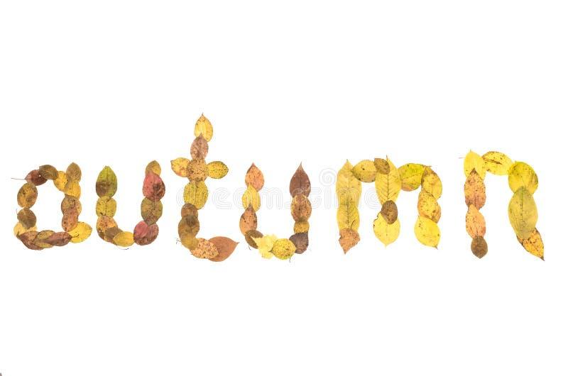 outono - inscrição do texto feita das folhas caídas imagem de stock