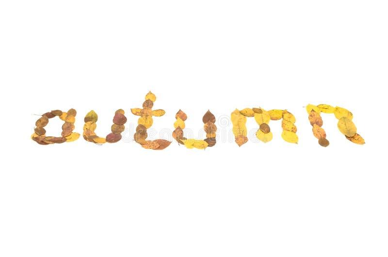 outono - inscrição do texto feita das folhas caídas foto de stock royalty free