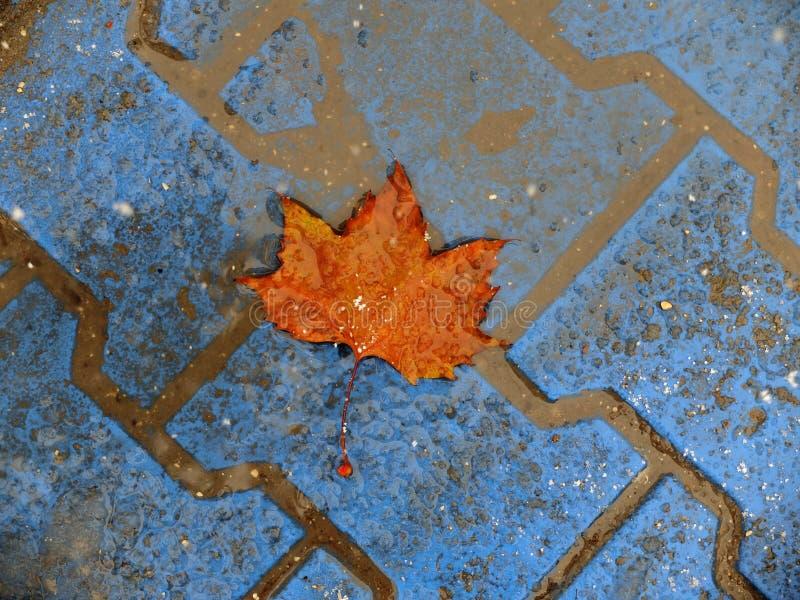 outono, inverno, folha alaranjada fotos de stock