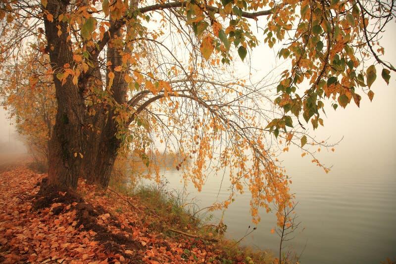 outono, névoa, manhã fotos de stock