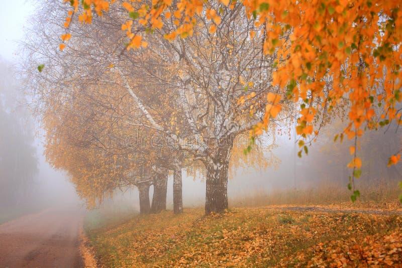 outono, névoa, manhã imagem de stock royalty free