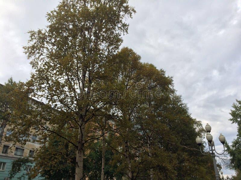 outono na cidade norte imagem de stock royalty free
