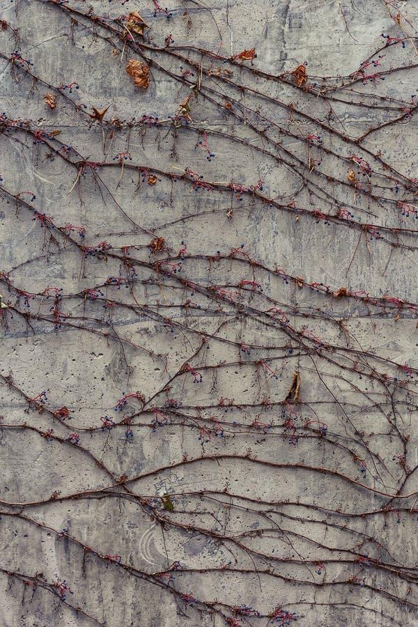 outono na cidade: vinha imagem de stock