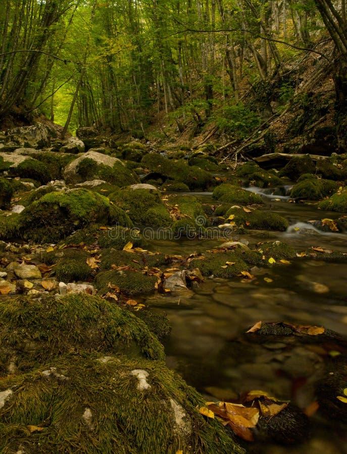 Outono na floresta. fotos de stock