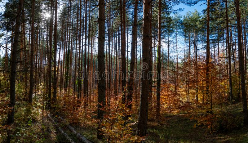 Outono na floresta imagem de stock