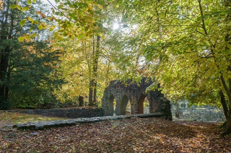 Outono na floresta fotos de stock royalty free