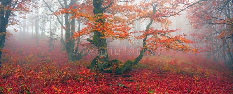 outono na floresta alpina fotografia de stock royalty free