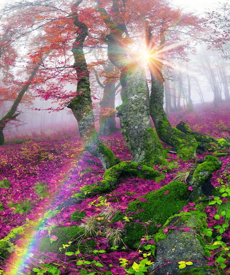 outono na floresta alpina imagens de stock