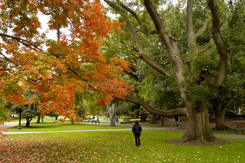 Outono na terra comum de Boston imagem de stock royalty free