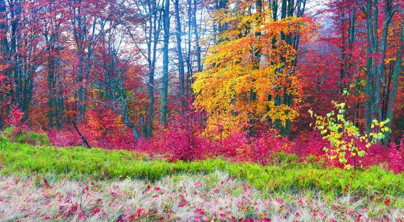 outono nas montanhas de Europa imagens de stock royalty free