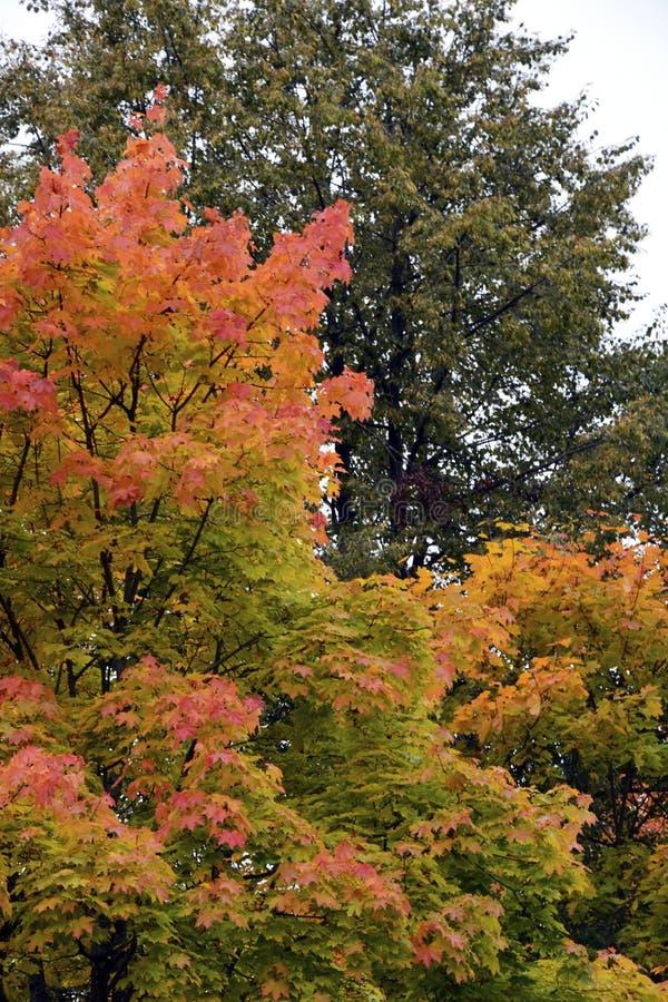 outono, natureza, céu nebuloso da floresta do outono Folhas de outono douradas imagem de stock royalty free
