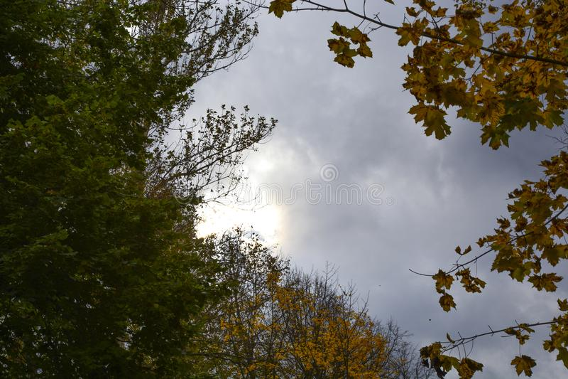 outono, natureza, céu nebuloso da floresta do outono Folhas de outono douradas fotos de stock royalty free