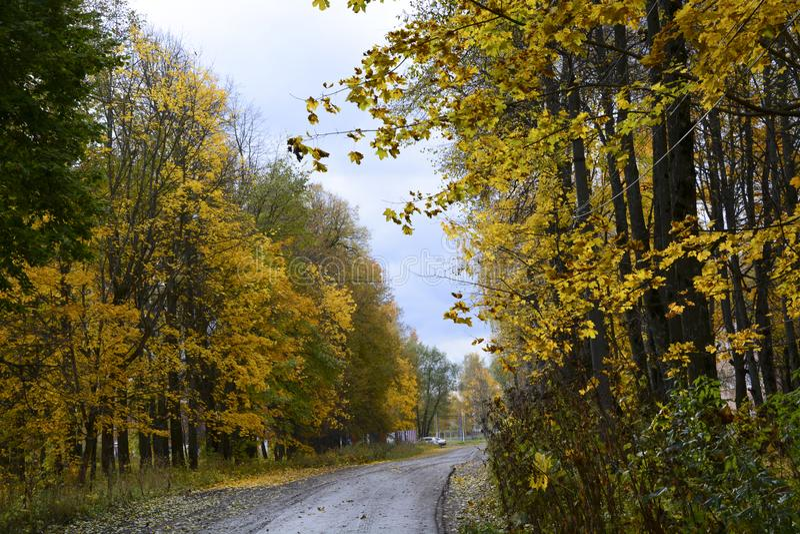 outono, natureza, céu nebuloso da floresta do outono Folhas de outono douradas imagens de stock royalty free
