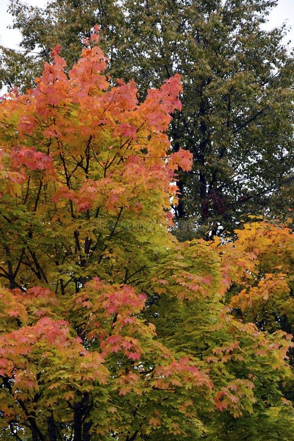 outono, natureza, céu nebuloso da floresta do outono Folhas de outono douradas fotografia de stock