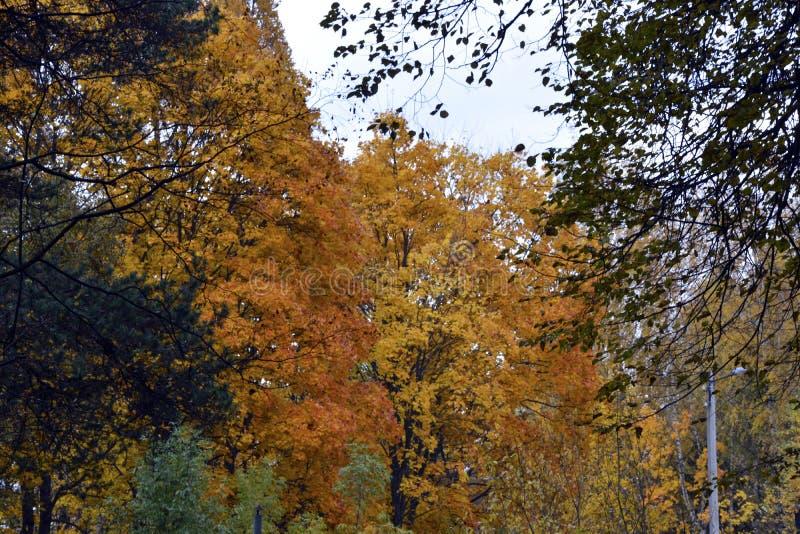 outono, natureza, céu nebuloso da floresta do outono Folhas de outono douradas imagem de stock