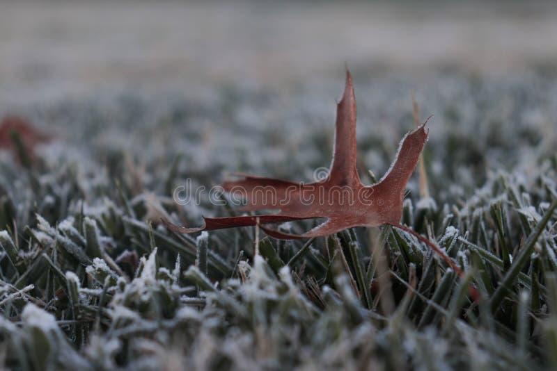 outono no inverno imagens de stock