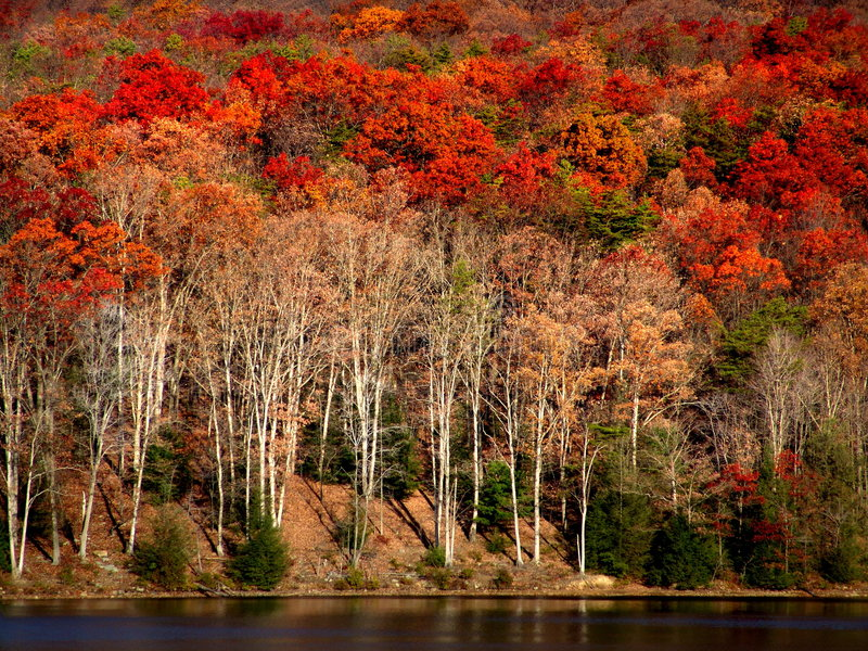 Outono no lago imagens de stock royalty free