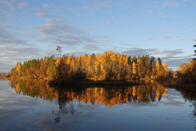outono no lago da floresta imagens de stock
