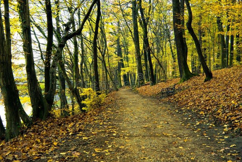 Outono no maksimir do parque em zagreb foto de stock