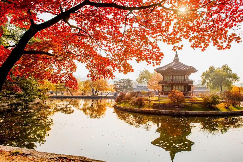 outono no palácio de Gyeongbokgung, Seoul em Coreia do Sul fotos de stock