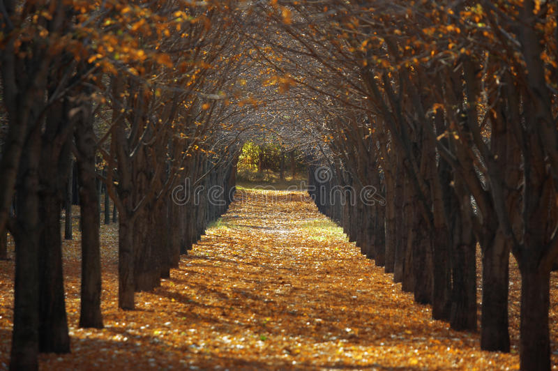 Outono no parque fotos de stock