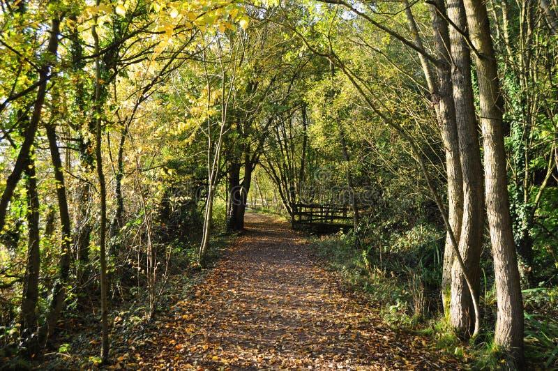 Download Outono no parque foto de stock. Imagem de autumnal, footpath - 16865436